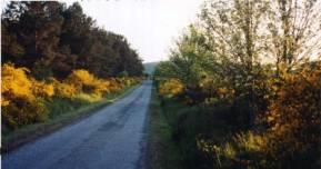 2002 Scotiana.com