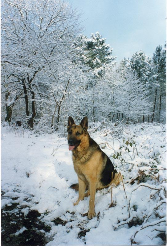 Ralph dans la neige bois de Cestas