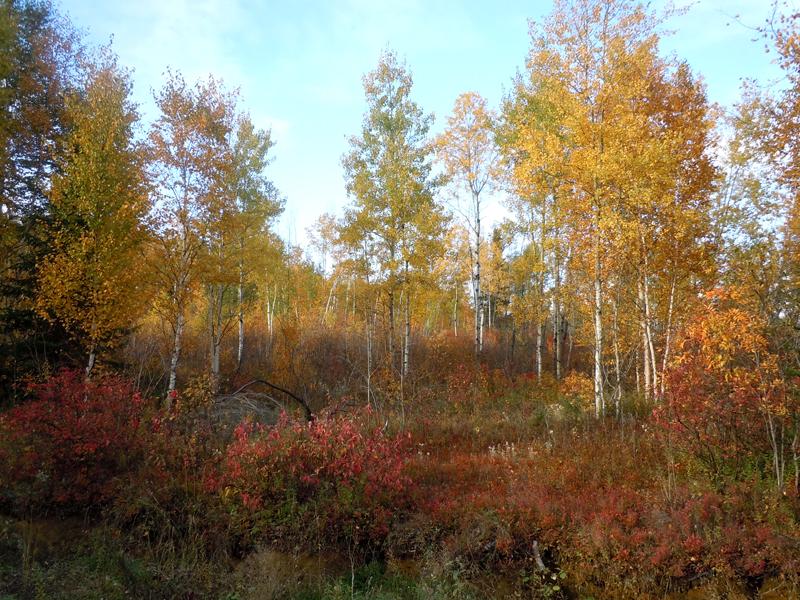 Autumn colours Lac des Commissaires Province of Quebec