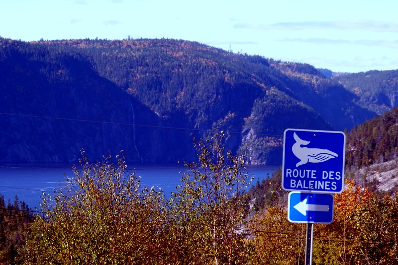 Quebec QC Saguenay Route des Baleines road sign