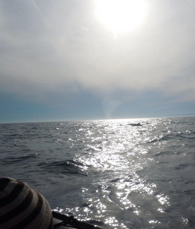 Zodiac whales watching cruise Tadoussac Quebec