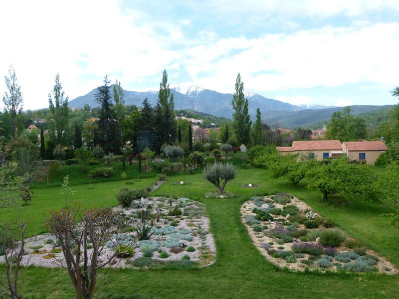 Castell Rose Garden Mont Canigou Pyrnes Orientales France  2012 Scotiana