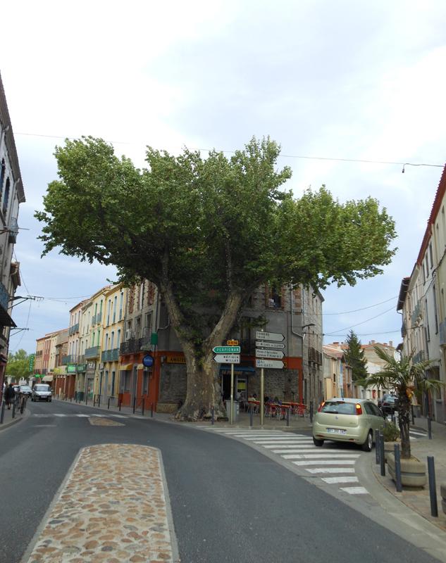 France Languedoc-Roussillon Pyrénées Orientales Ille-sur Têt The big plane tree © 2012 Scotiana