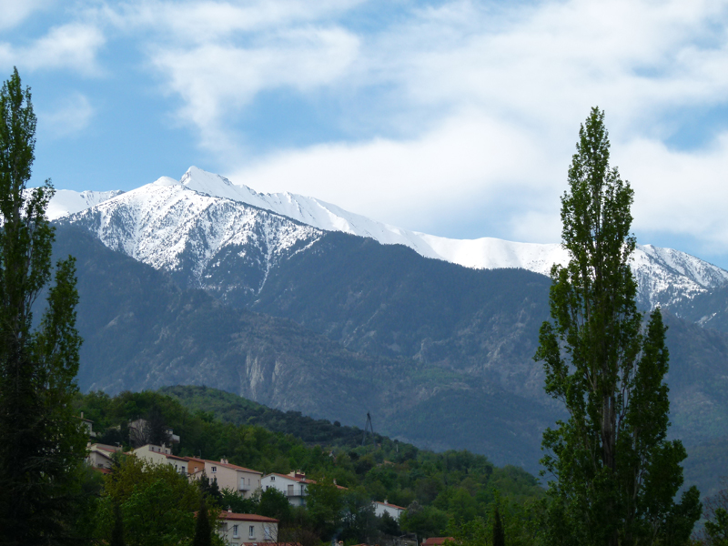 View on Mont Canigou from Ille-sur-Tt Pyrnes Orientales France  2012 Scotiana