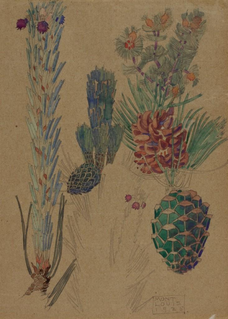 Pine Cones 1925 Source The Hunterian Museum & Art Gallery University of Glasgow