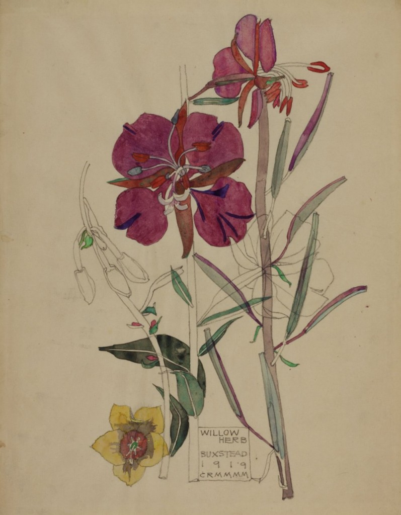 Willow Herb, Buxstead 1919 Source The Hunterian Museum & Art Gallery University of Glasgow