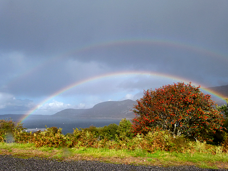 Thurso-Ullapool road rainbows & rowan tree © 2012 Scotiana