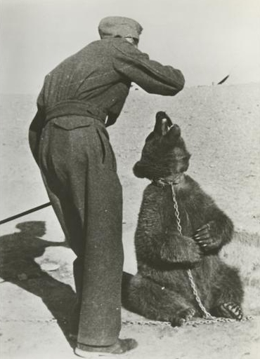 Polish soldier with Wojtek in Iran 1942 Source Wikipedia