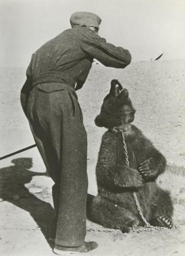 Polish soldier with Wojtek in Iran 1942 Source Wikipedia