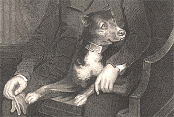 Sir Walter Scott's dog Camp portrayed by James Saxon in 1805