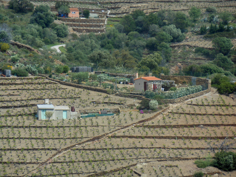 Vine terraces near Port Vendres © 2012 Scotiana