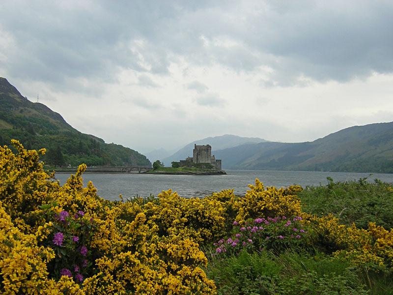 Eilean Donan Castle rhodos and yellow gorse © 2004 Scotiana