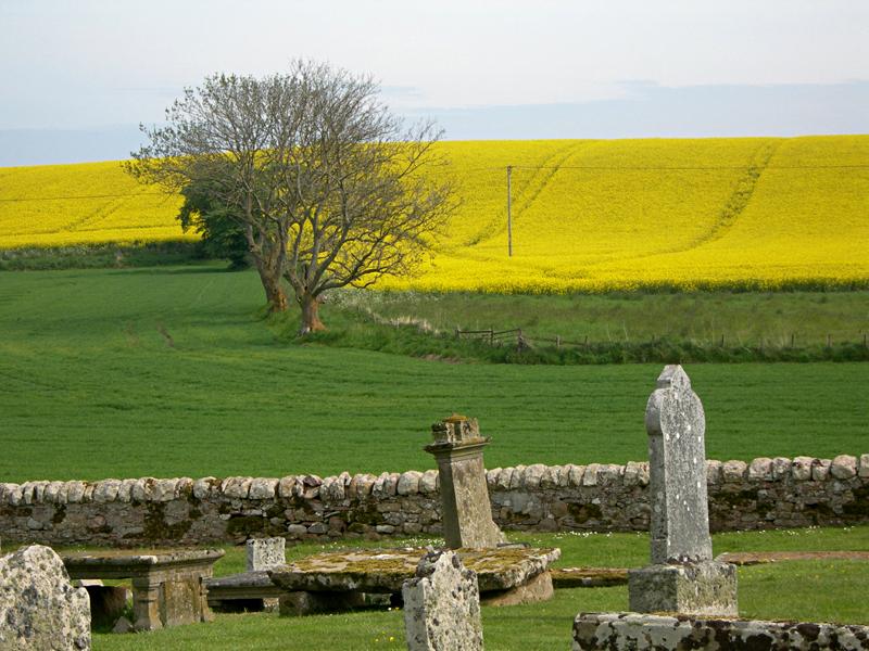 Tarbat graveyard and yellow fields © 2006 Scotiana