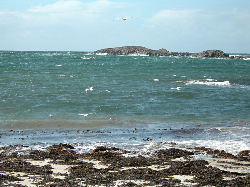 Iona beach seaweed gulls and rocks © 2006 Scotiana