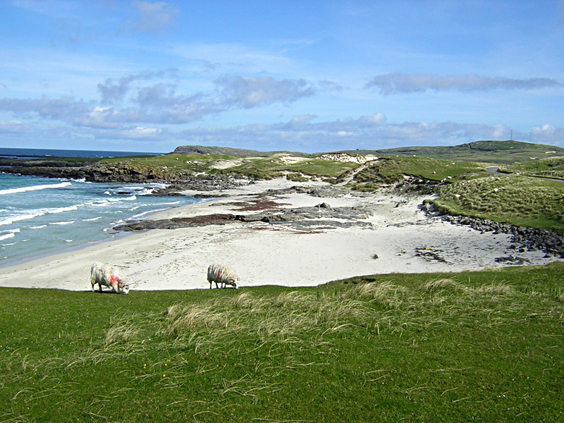 Isle of Barra Outer Hebrides sheep on the seashore © 2004 Scotiana