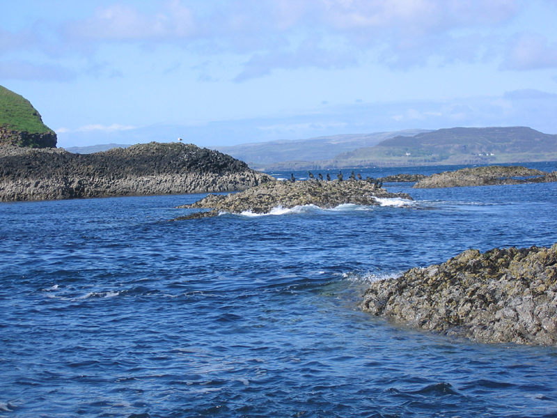 Staffa cormorants and gulls © 2004 Scotiana