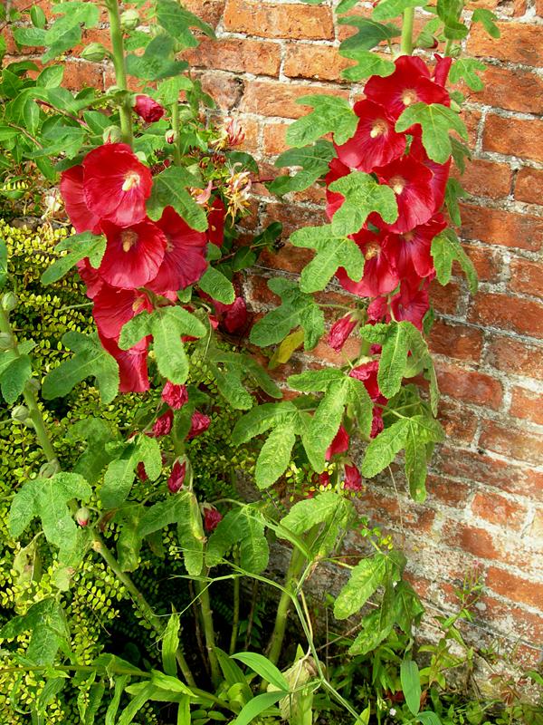 Red flowers Dunmore garden © 2007 Scotiana