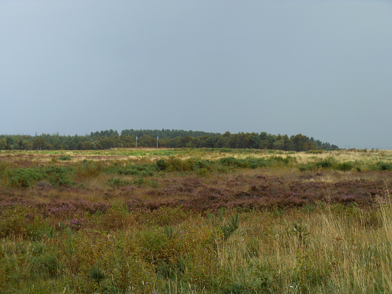 Culloden battlefield Scottish side © 2012 Scotiana