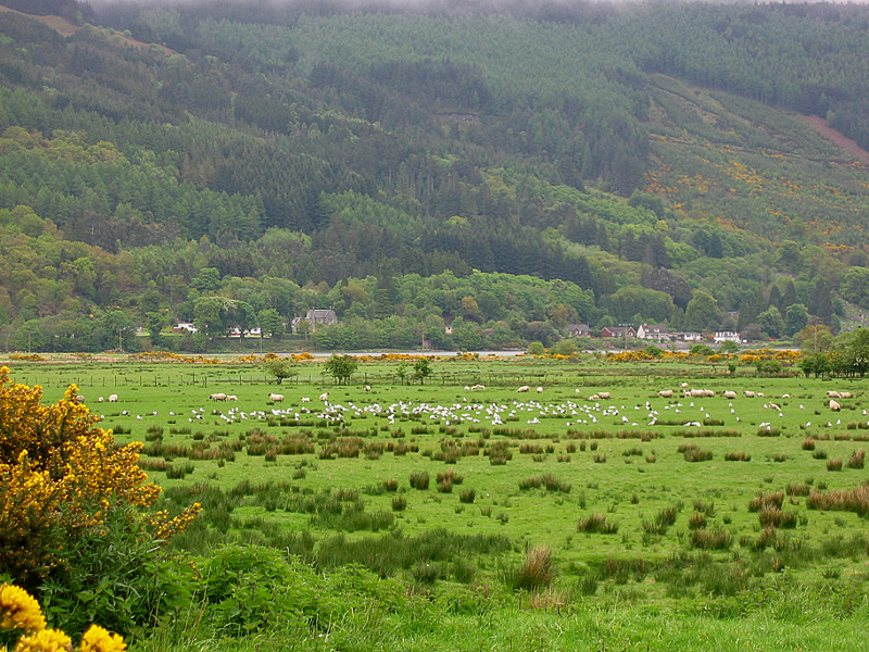 Hills and fields on the Cowal peninsula  © 2004 Scotiana