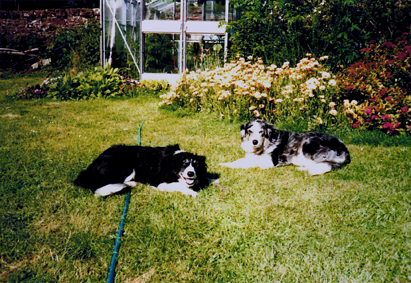 Resting time for George's border collies  © Scotiana