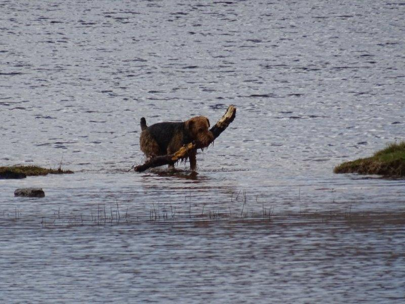 Dog playing in the waters near Ardvreck Castle - Scotland