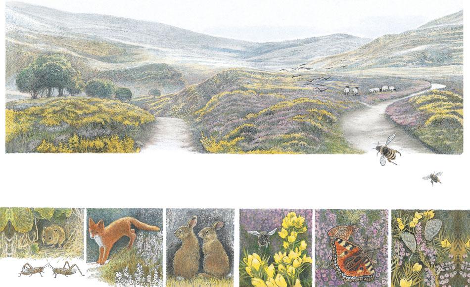 The Secret Garden F H Burnett & Inga Moore wild animals