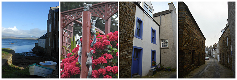 GMB's favourite corner near the Stromness Museum - hydrangeas and squirrels in a garden - Alfred Street © Scotiana 2016