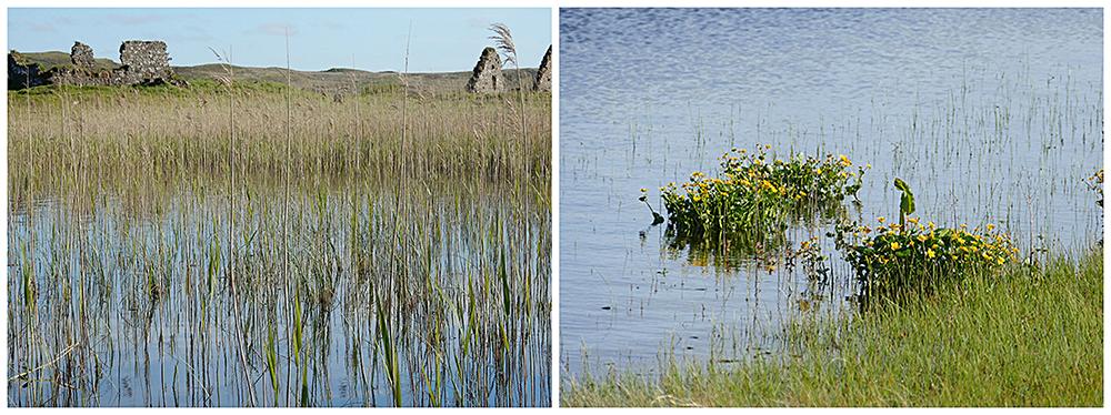 Islay Finlaggan history & wildlife © 2015 Scotiana