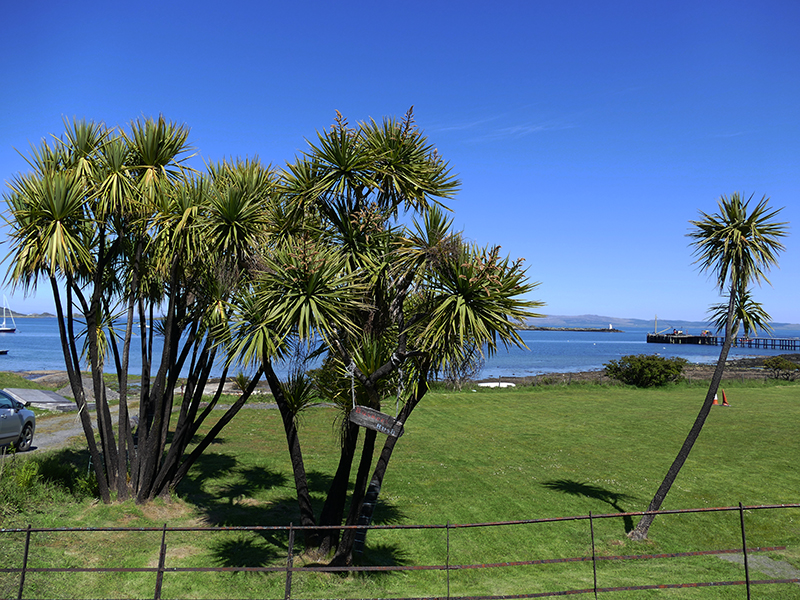 Isle of Jura palm trees © 2015 Scotiana