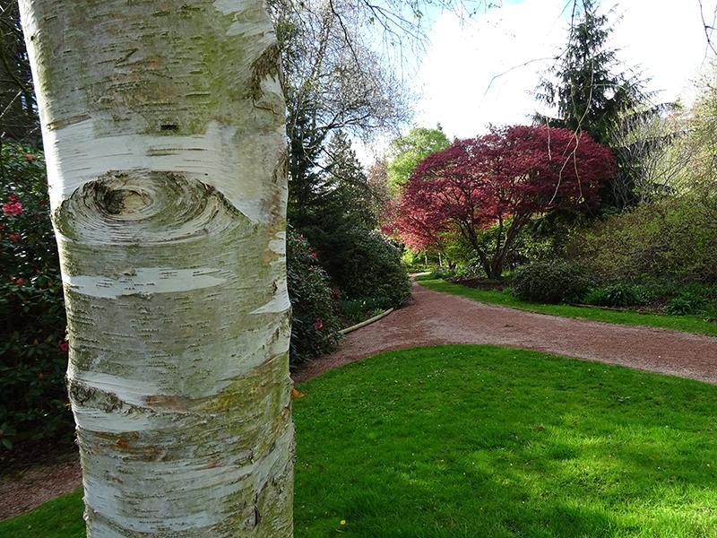 Fyvie castle arbre croisée des chemins © 2015 Scotiana