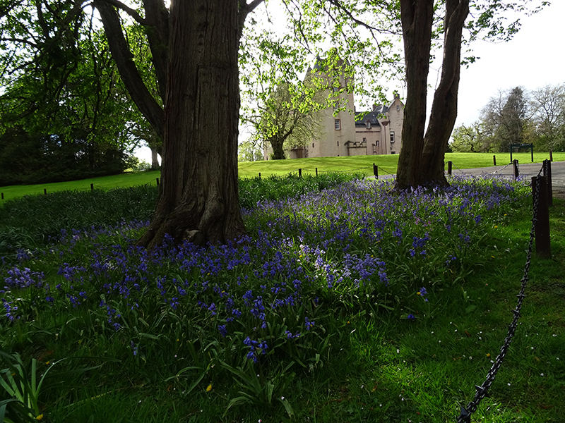 Fyvie Castle park bluebells season © 2015