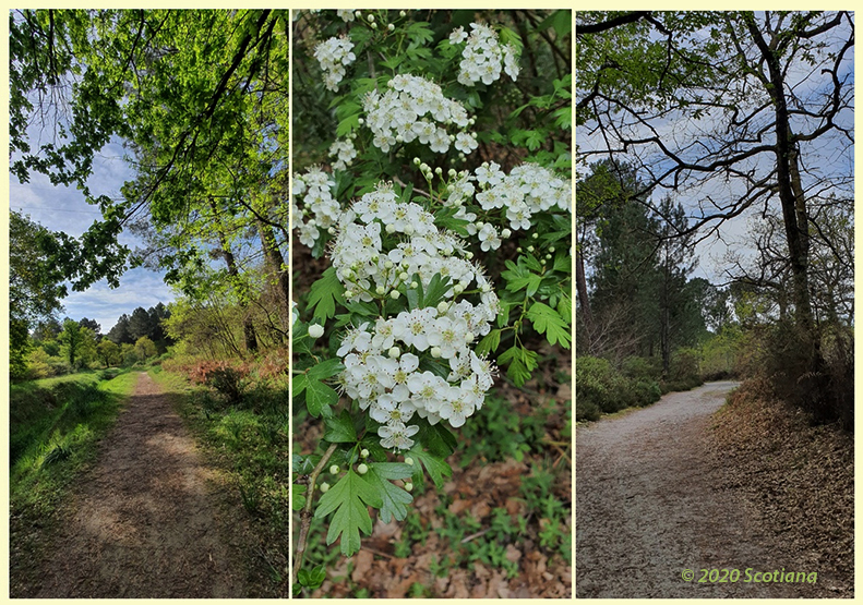 Country path Aquitaine France© 2020 Scotiana