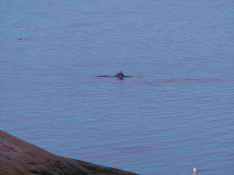 Quebec PQ Cap de Bon-Désir whale seal gull