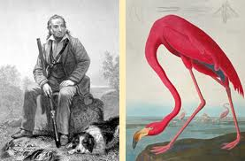 John James Audubon Pink Flamingo