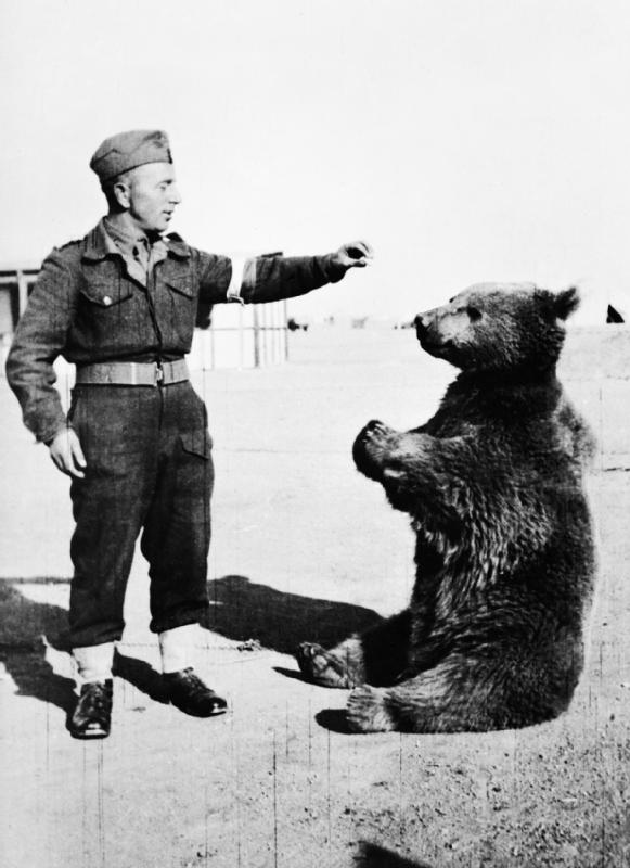Wojtek the Bear with a Polish soldier 1942 Source Wikipedia