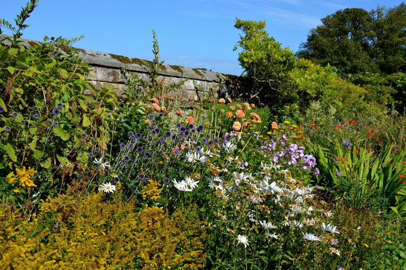 Dirleton Castle herbaceous garden wall 1