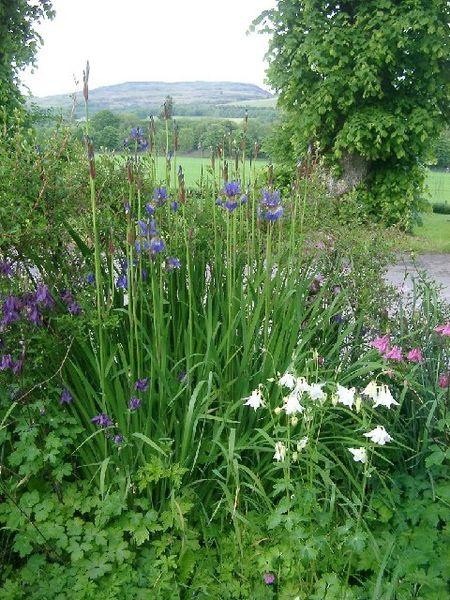 Irises and columbines and view onto Deuchary Hill from Dalguise Wikimedia