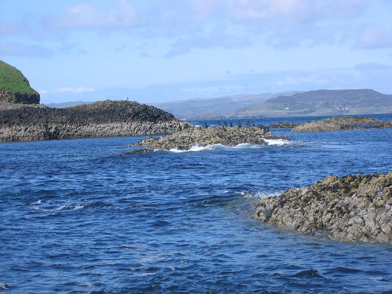 Staffa cormorants and gulls © 2004 Scotiana