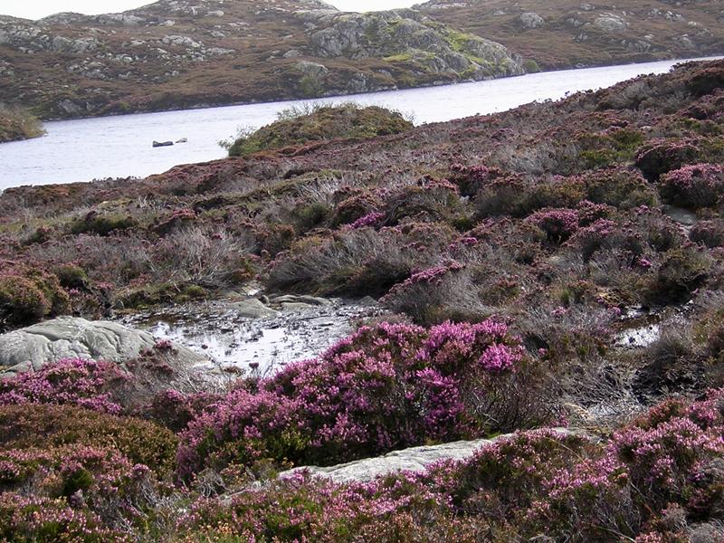 Harris water rocks and heather © 2003 Scotiana