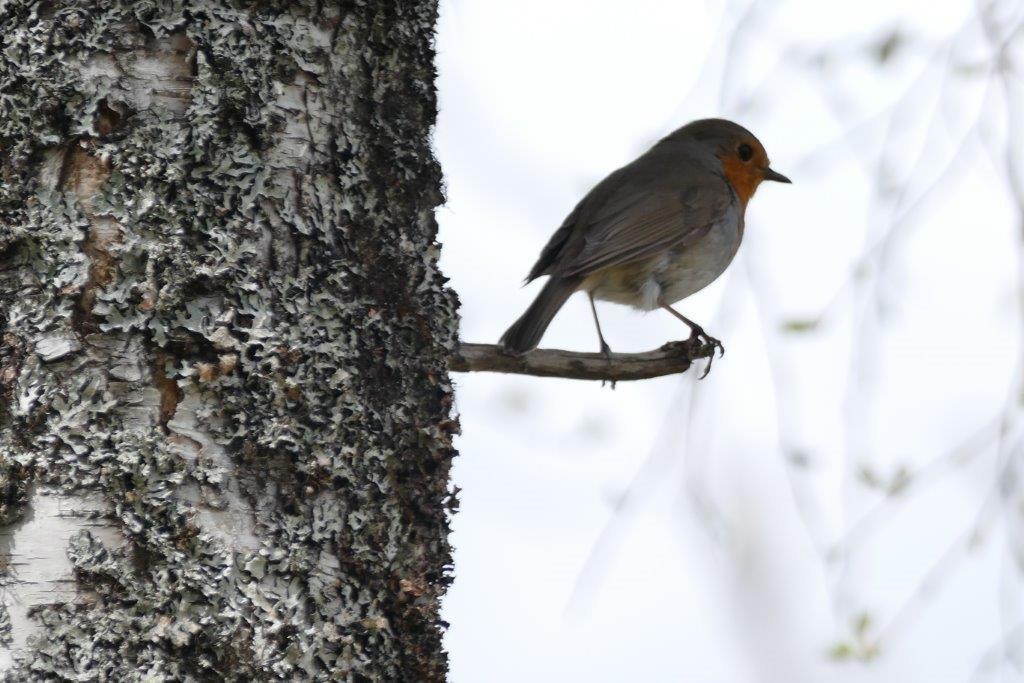 Birds - Scotland