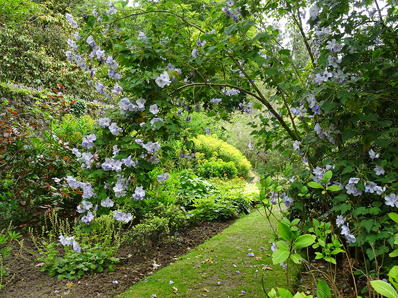 Castle Kennedy Walled Garden © 2015 Scotiana