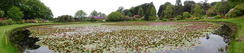 Panoramic view of the Lily Pond in Kennedy Castle Gardens © 2015 Scotiana
