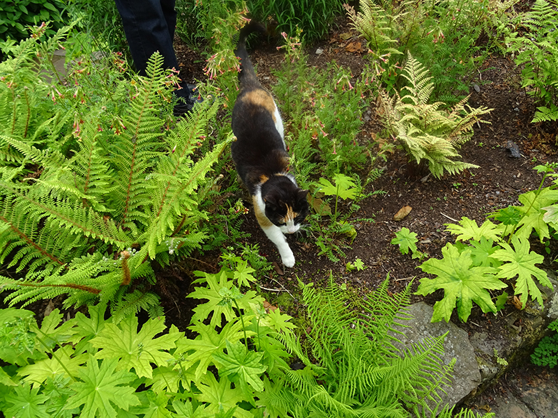 Broughton House Garden the cat © 2015 Scotiana