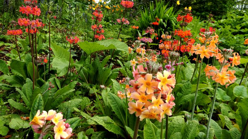 threave-garden-colorful-flowers