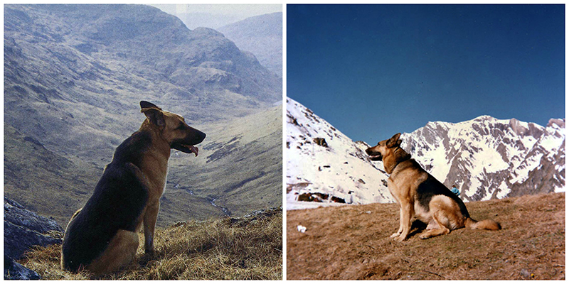 Moobli & Ralph in the Scottish and French  mountains © Scotiana