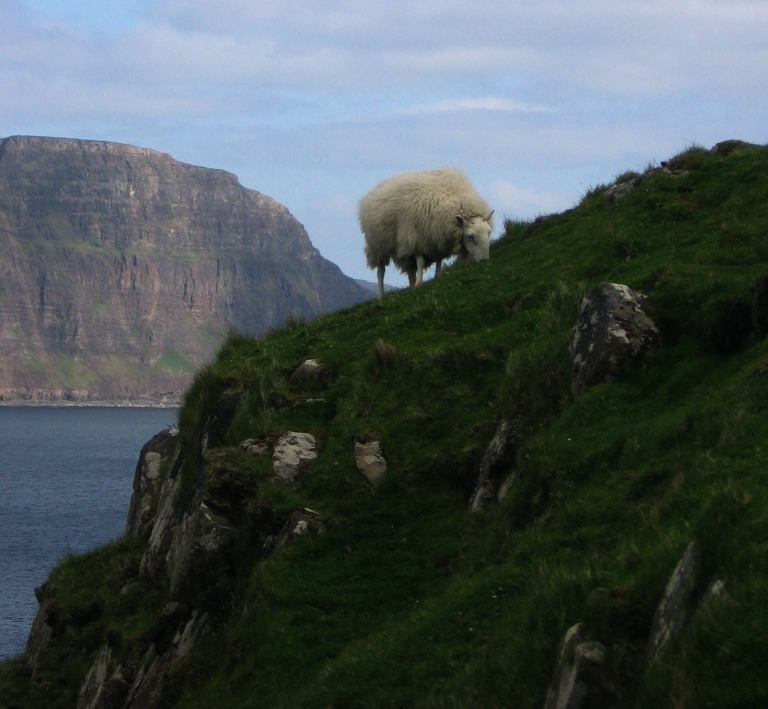 Neist Point Lighthouse Sheep on  Cliff Edge- Isle of Skye Scotland