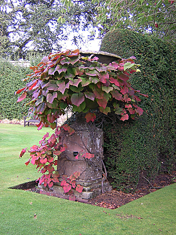 Falkland Palace Garden autumn foliage in a big urn © 2003 Scotiana