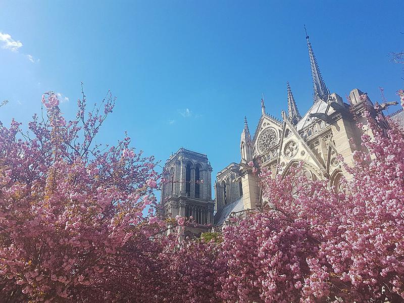Façade Sud de Notre-Dame de Paris à la floraison des cerisiers - Wikipedia