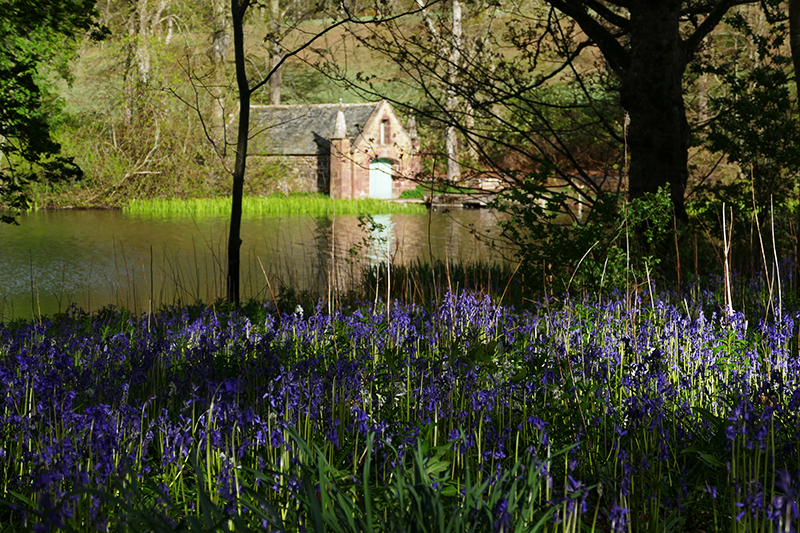 Fyvie Castle boathouse loch Fyvie bluebells © 2015