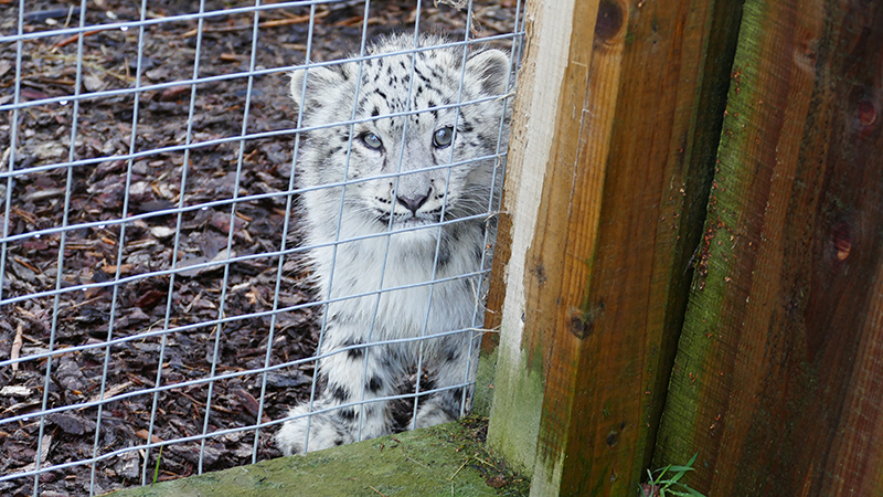 Highland Wildlife Park January 2020 © 2020 Scotiana